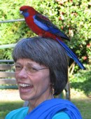 Linda and wild parrot