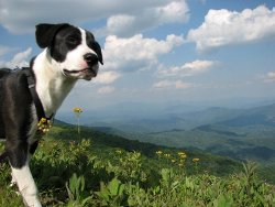Lola on the mountaintop