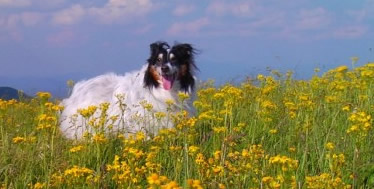 Mitch on the mountain in yellow flowers