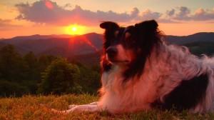 Anam Cara: Mitch sunset