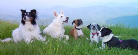 Mitch, Tucker, Lucy, Gracie and Lola, left to right, oldest to youngest