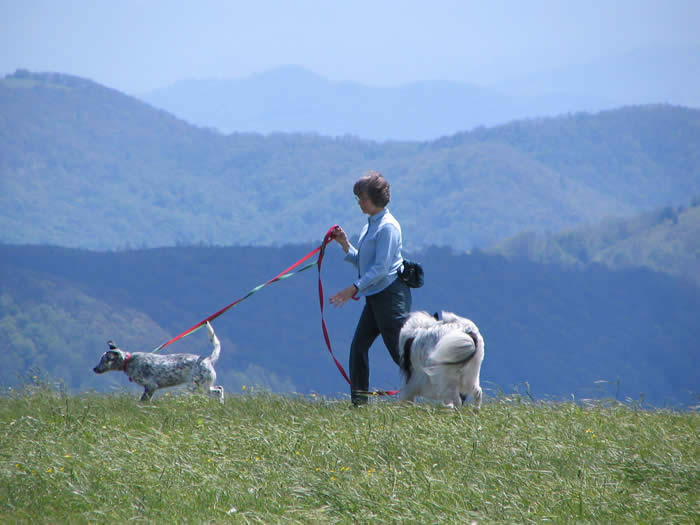 Max Patch with dogs, Western NC mountains