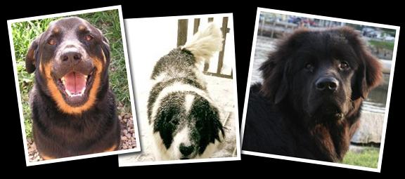 Trooper (Daniel Stokoe), Panda (Diana McLean), Tallulah (Kate Hale)